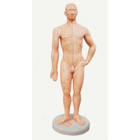 Acupuncture Point Model, 1 Pc