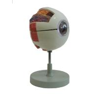 Eye Model, 6X Mag 6Pc