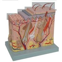 Skin, 70X Mag Block Model