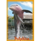 Curiosity Quest: Dolphins DVD
