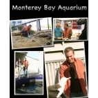 Curiosity Quest: Monteray Bay Aquarium DVD
