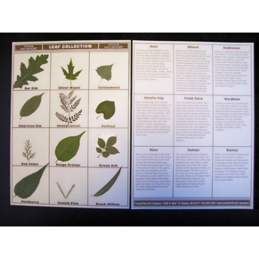Leaf Collection, Mounted.