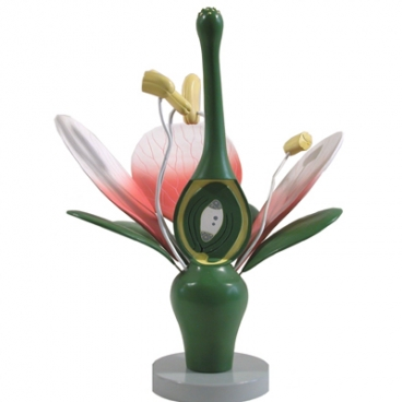 Model: Plant Dicot Flower.