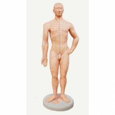Acupuncture Point Model, 1 Pc. Labeled.