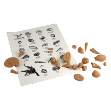 Fossil Kit,Reproductions,10-Pk.