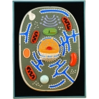 Animal Cell Plaque