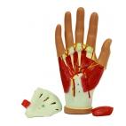 Hand Model, Tissues