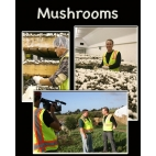 Curiosity Quest: Mushrooms DVD