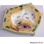 Plant Cell Model, 20,000x Magnified