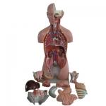 Organ Models